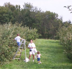 Thierbach's Orchards